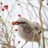 50K-plus birds counted at CBC