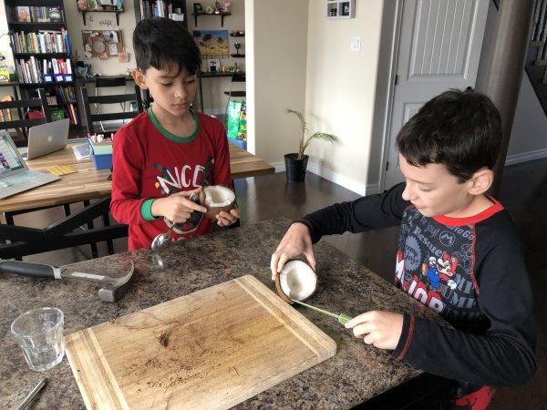 Two young boys peel the flesh from inside a coconut while sitting at a kitchen table.