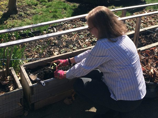 A woman crouches infront of a gardening trough, planting some crops.